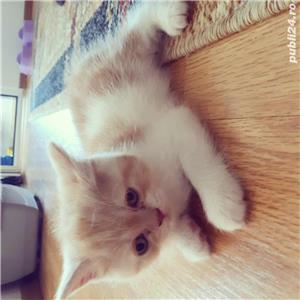 Hello kitty - imagine 9