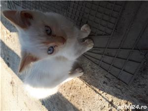 Pisic - imagine 3