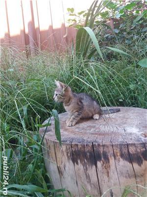 Pisicuța - imagine 2