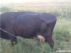 Vaca de ținut - imagine 1