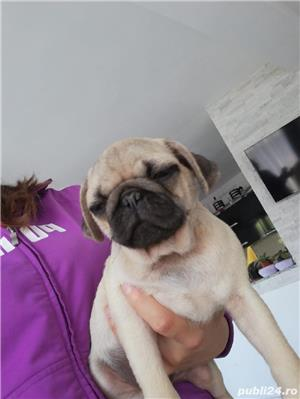Mops pug/bej - imagine 3