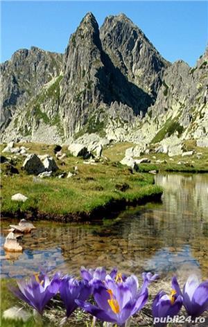 Casă și grădină la poalele retezatului zona turistică Țara Hațegului - imagine 9