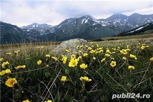 Casă și grădină la poalele retezatului zona turistică Țara Hațegului - imagine 8