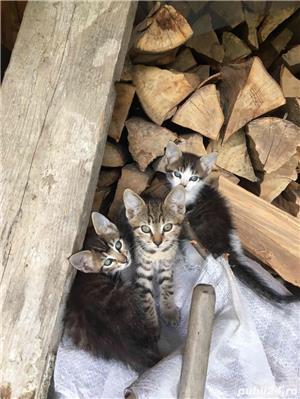 Pisici,Motani - imagine 2