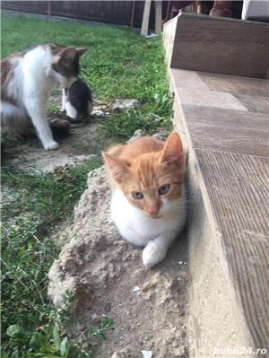 Pisici,Motani - imagine 5