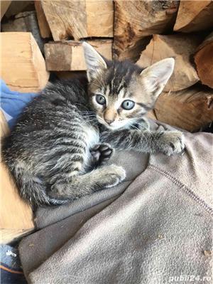 Pisici,Motani - imagine 4
