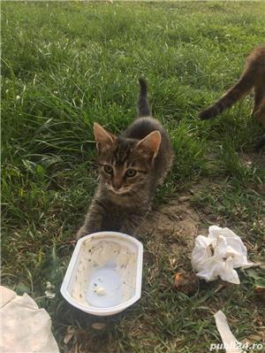 Pisici,Motani - imagine 3