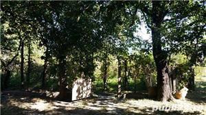 Casa de Vanzare in Caiuti, Jud. Bacau - imagine 4