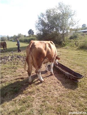 Vaci de lapte  - imagine 3