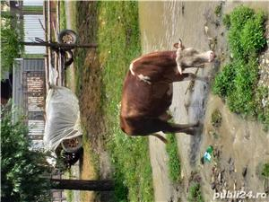 Vand vaca - imagine 3