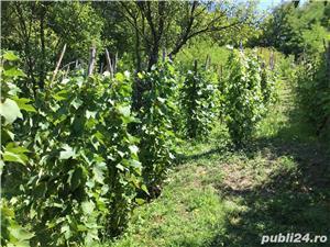 Vând casă cu grădină în Șoroștin - imagine 4