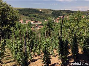 Vând casă cu grădină în Șoroștin - imagine 10