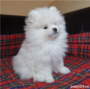 pomeranian mini toy - imagine 3