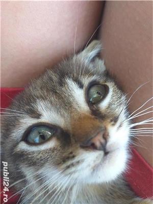 Pui de pisica  - imagine 10