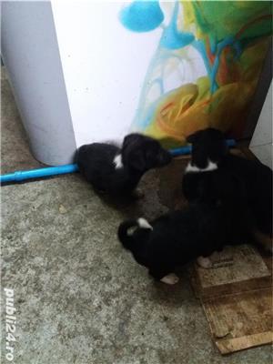 ofer spre adoptie pui caine rasa comuna talie medie si mica - imagine 9