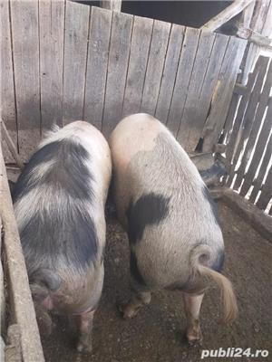 Porc gras - imagine 4