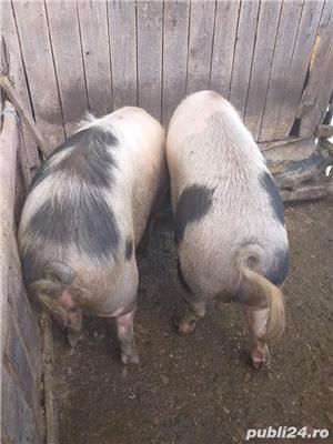 Porc gras - imagine 2