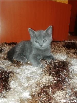 Pisici - imagine 6