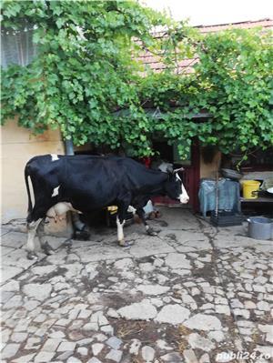 Vând 2 vaci, fiecare cu vițel - imagine 5