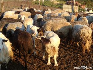 120 oi si 20 capre - imagine 7