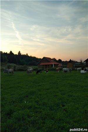 Farmhouse Rosehip Romania Brașov Rasnov  - imagine 1