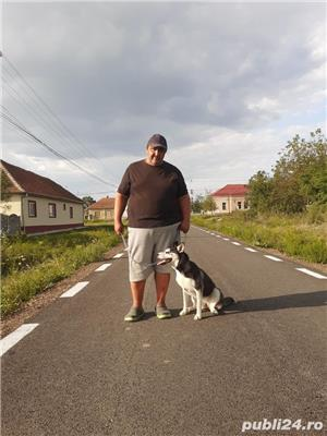 Dresor caini Timisoara - imagine 2