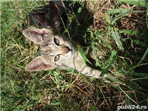 Pisicuța - imagine 3