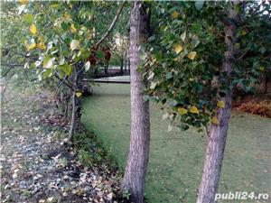 casa sau microferma cu gradina mare 80 de arii la 30 de km de oradea - imagine 6