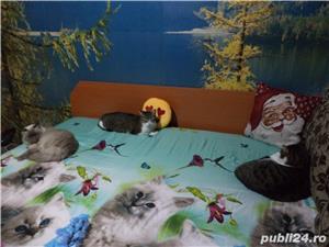 Ingrijitoare pt pisici - imagine 2