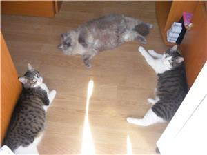 Ingrijitoare pt pisici - imagine 3