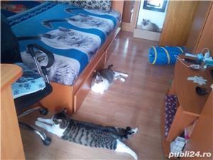 Ingrijitoare pt pisici - imagine 5