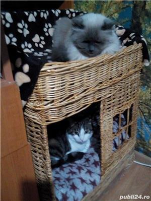 Ingrijitoare pt pisici - imagine 4