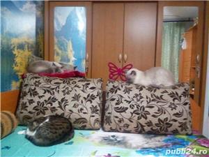 Ingrijitoare pt pisici - imagine 6