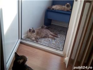Ingrijitoare pt pisici - imagine 7
