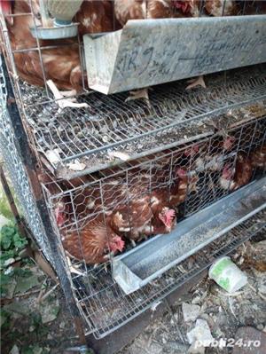 Urgent 40 găini ouatoare - imagine 2