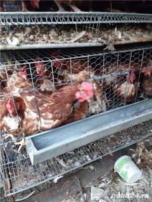 Urgent 40 găini ouatoare - imagine 1