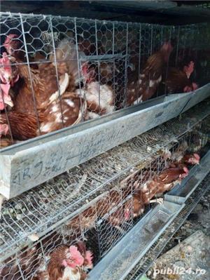 Urgent 40 găini ouatoare - imagine 3