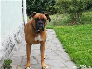 Boxer mascul talie mare - imagine 1