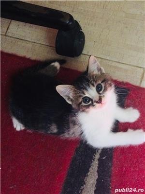 Pisic / Cats - imagine 4