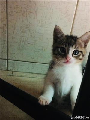Pisic / Cats - imagine 2