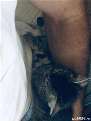 Pisic / Cats - imagine 7