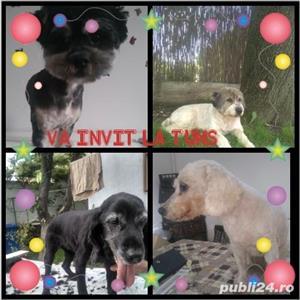 Tund câini - imagine 4