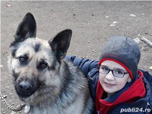 câine  - imagine 1
