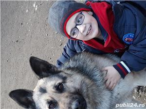 câine  - imagine 2