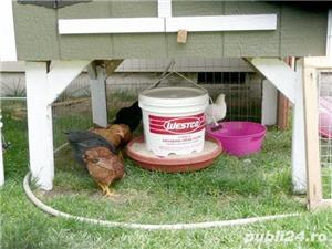 Pui de carne taiati  - imagine 3
