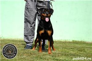 Femela Rottweiler 11 luni - imagine 3