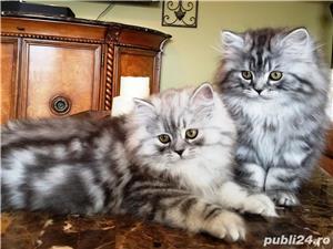 motanel silver long hair - imagine 2
