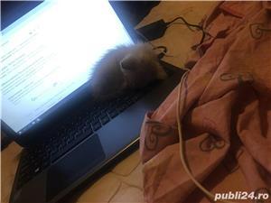 Pisic - imagine 5