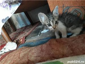 dau pui pisica - imagine 1