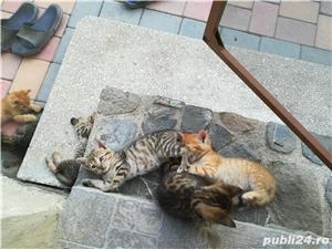 Pisici - imagine 7